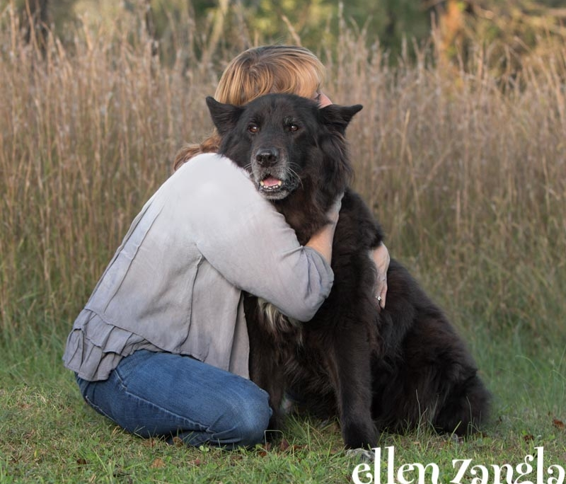 Dog photographer, Loudoun County, Ellen Zangla Photography