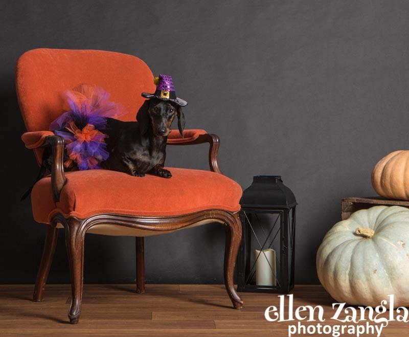 Pet Halloween Costume Contest