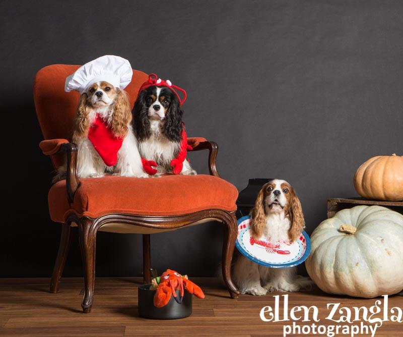 Halloween Pet Photo Costume Contest