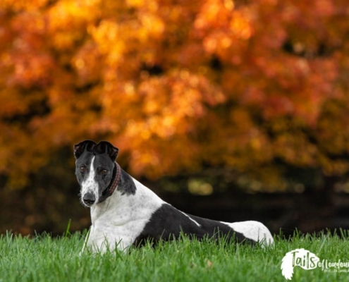 Ellen Zangla Photography, Loudoun County Pet Photographer, Loudoun County Dog Photographer