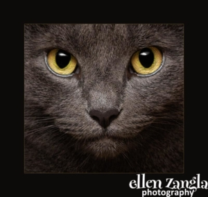 Ellen Zangla Photography, Loudoun County Pet Photographer, Cat Photographer