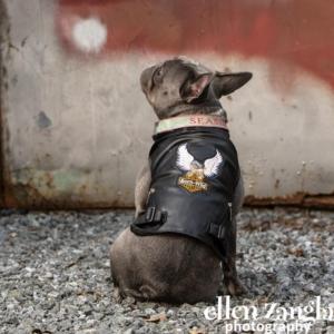 French Bulldog, Ellen Zangla Photography, Loudoun County Dog Photographer