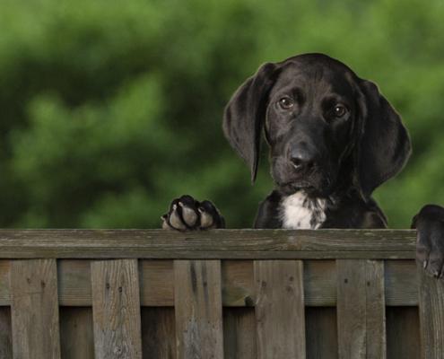 Puppy photo, Ellen Zangla Photography, Loudoun County Pet Photographer