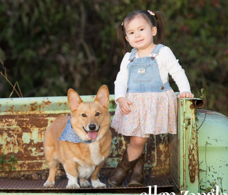 Corgi Photo, Ellen Zangla Photography, Loudoun County Dog Photographer