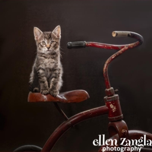 Ellen Zangla Photography, Loudoun County Pet Photographer, Kitten Photo