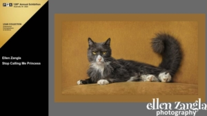 Ellen Zangla Photography, Loudoun County Pet Photographer, Cat Photo