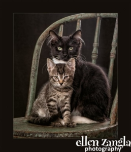 Kitten photo, Ellen Zangla Photography, Loudoun County Pet Photographer