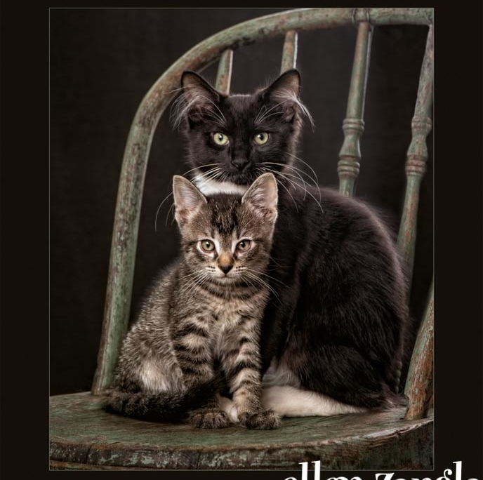 Kitten photo, Ellen Zangla Photography, Loudoun County Pet Photographer