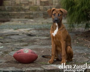 Puppy photos, Loudoun County, Dog Photographer, Ellen Zangla Photography