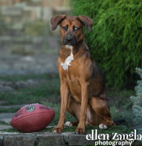 Puppy photos, Ellen Zangla Photography, Dog Photographer, Norhtern Virginia