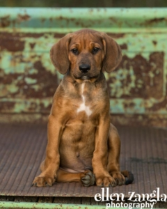 Loudoun County, Pet Photographer, Puppy photos, Ellen Zangla Photography