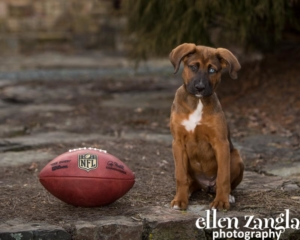Puppy photo, Ellen Zangla Photography, Loudoun County VA, Ellen Zangla Photography