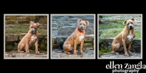 Puppy photos, Ellen Zangla Photography, Loudoun County