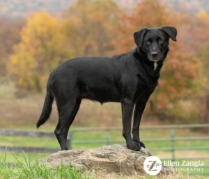 Photo of Black Dog in Front of Fall leaves