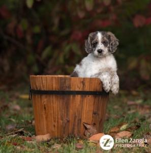 Puppy photo taken outside in the fall in a basket