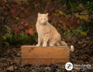 Photography of cat sitting on crate outside in the fall