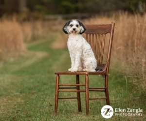 Photo of Dog On Chair Taken Outside in the Fall
