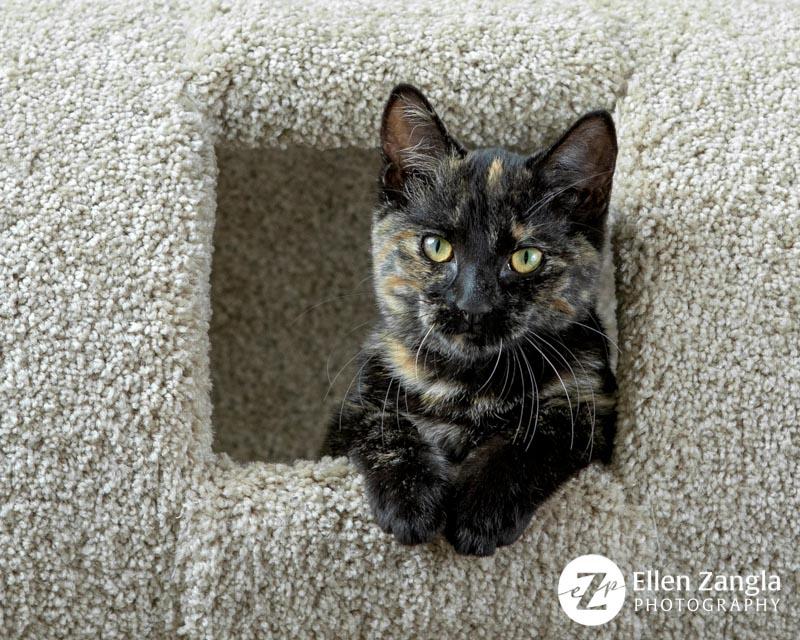 Photo of kitten taken by Ellen Zangla Photography in Waterford, VA.