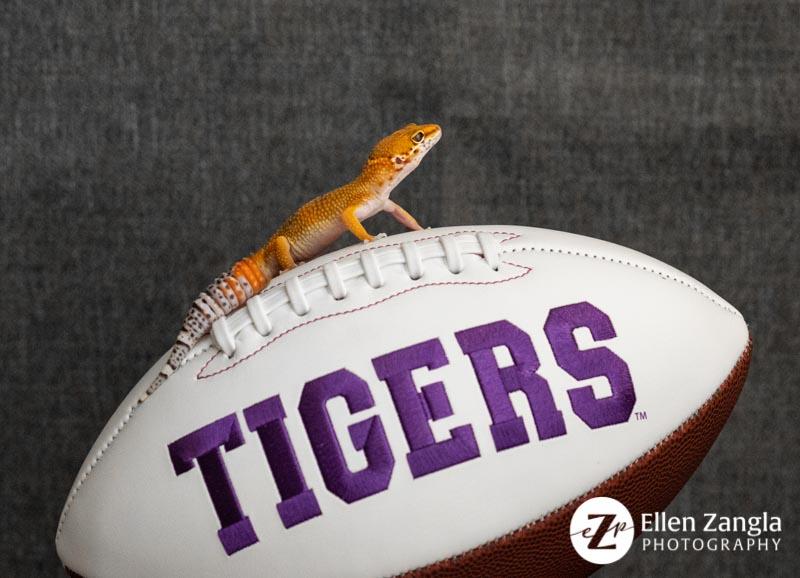 Photo of Gecko in Leesburg, VA, by Ellen Zangla Photography.