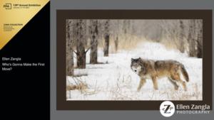 Award-winning wolf photo taken by Ellen Zangla Photography
