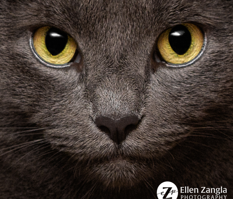 Close-up photo of cat's face by Ellen Zangla Photography