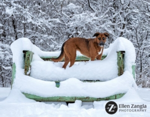 Photo of dog in snow in Loudoun County by Ellen Zangla Photography