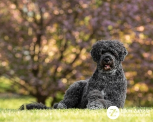 Ten tips for better spring photos of your dogs - have the sun light your dog from the front