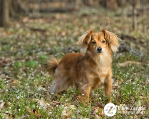 Spring photo tips with photo of dog in the flowers