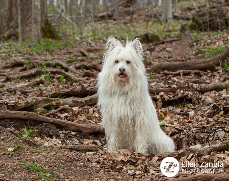 Photo of mixed breed dog in Leesburg VA by Ellen Zangla Photography