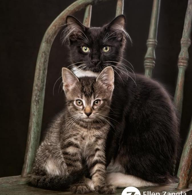 Award-winning photo of two kittens taken in Leesburg VA by Ellen Zangla Photography