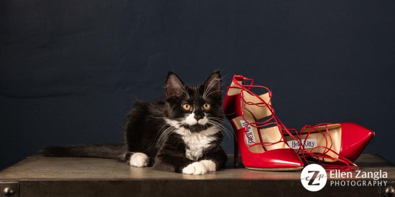 Kitten photo in Loudoun County VA by Ellen Zangla Photography