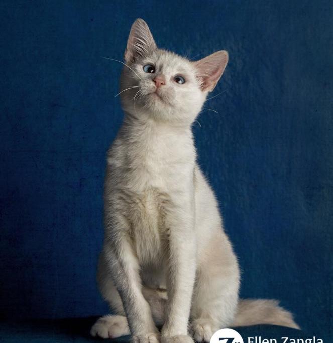 Award-winning kitten photo by Ellen Zangla Photography in Loudoun County VA