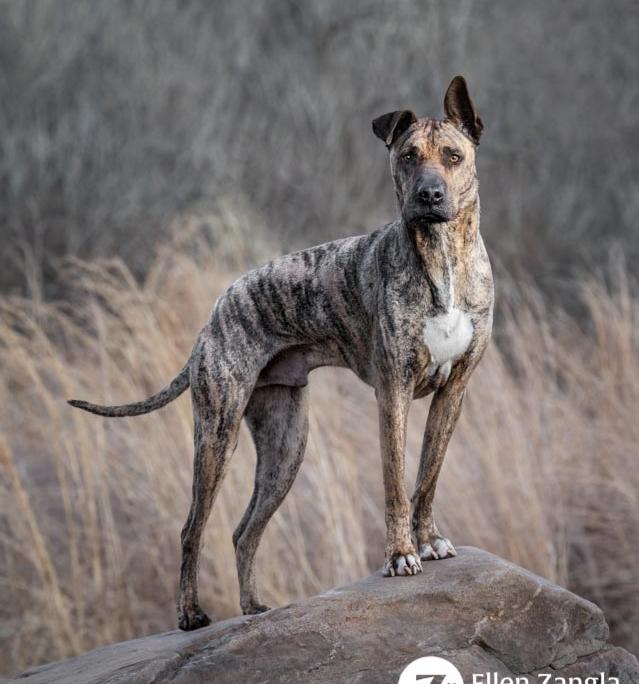 Award-winning photo of mixed breed dog in Loudoun County VA by Ellen Zangla Photography\