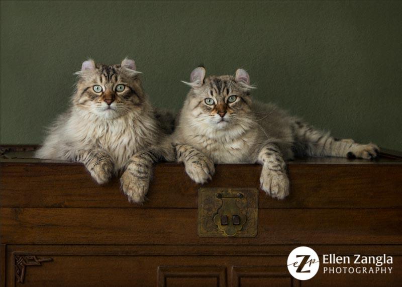 Photo of two cats by Ellen Zangla Photography in Leesburg VA